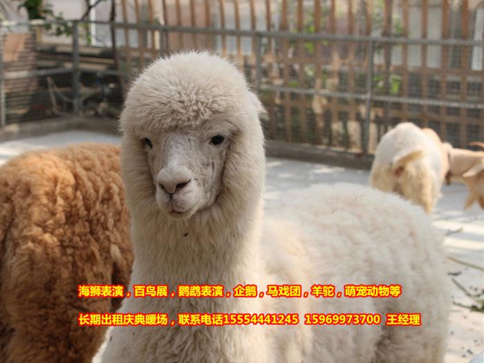 庆典出租海狮表演节目