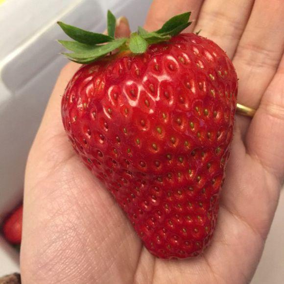 草莓编织针法图解