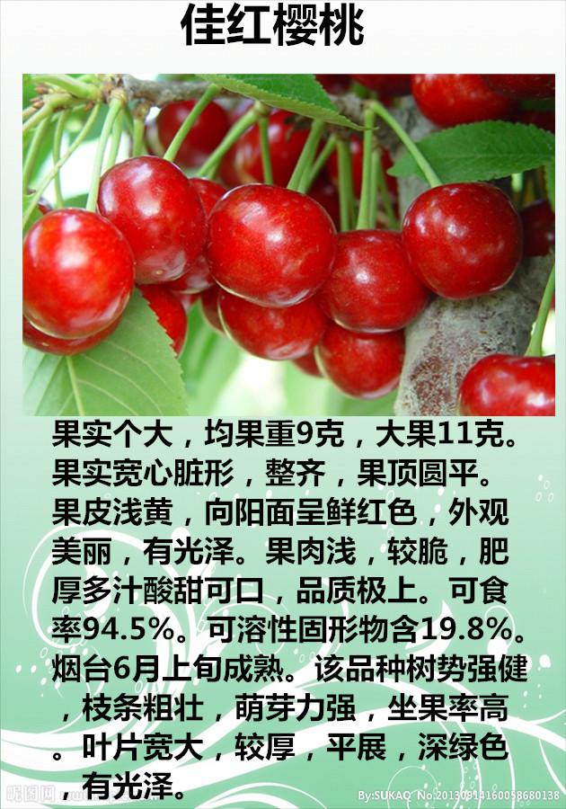 m9t337矮化苹果树苗,晚熟脆桃苗,吉塞拉樱桃苗,短枝高产梨树苗,蓝莓
