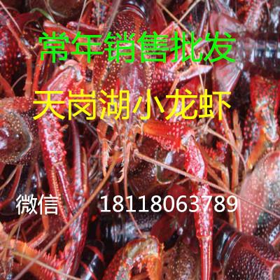 小龙虾多少钱一斤_供应信息