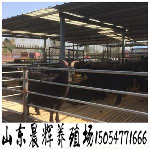 波尔山羊养殖视频安溪县
