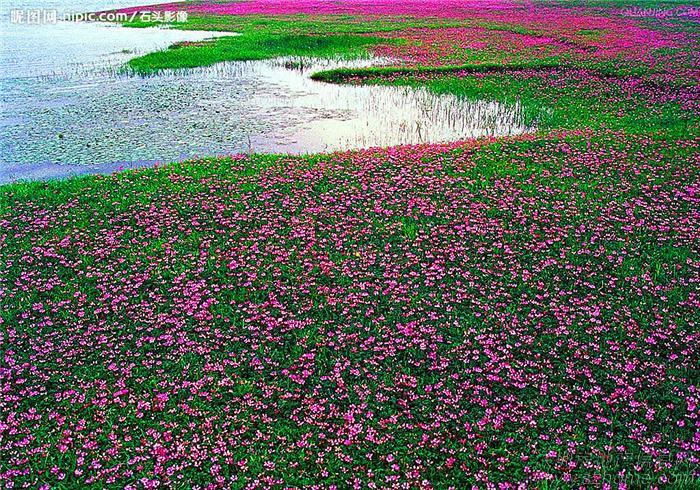 诚信种业《打造薰衣草花海》《美丽乡村规划设计》《花海景观设计》
