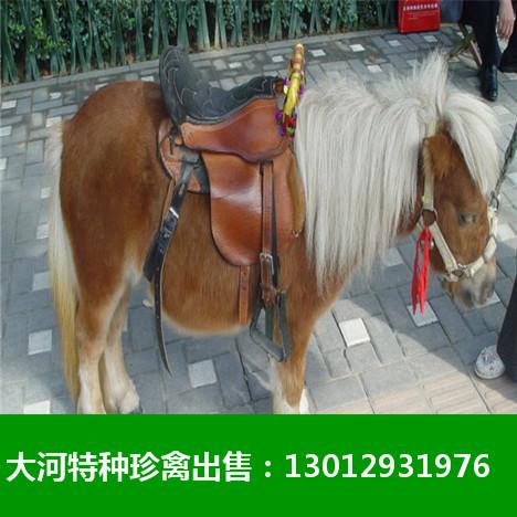 邯郸同城水母展览租赁海狮表演