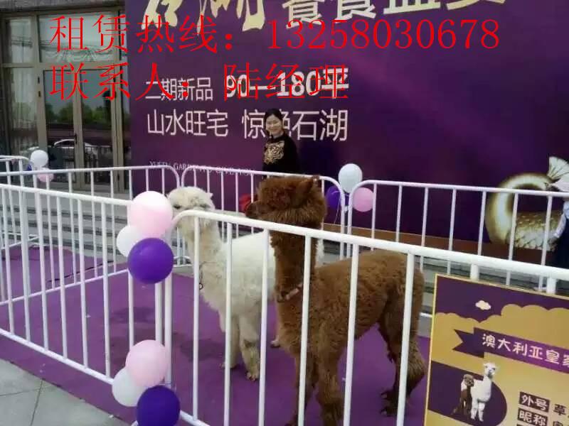 西宁动物展览价格低_供应信息