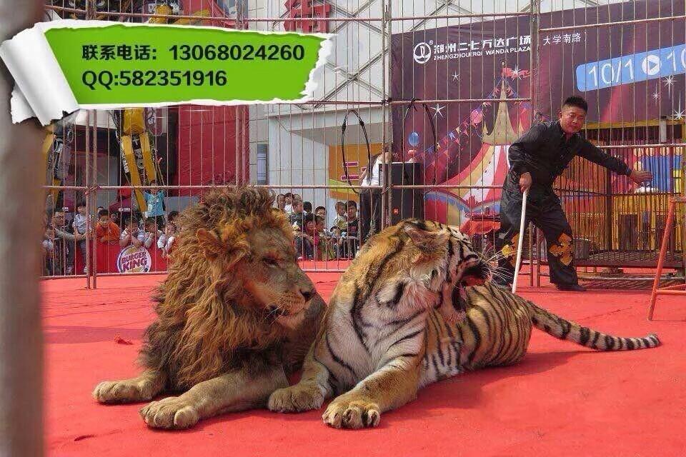 山东百鸟演出展示海狮秀训狮虎兽马戏团演出效果好