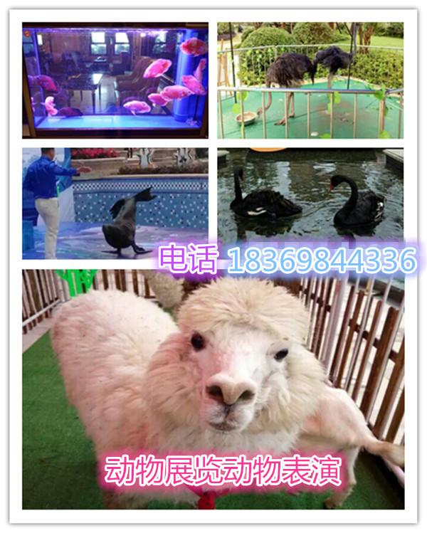 动物马戏表演节目