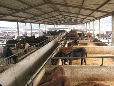唐山德州驴养殖场山东成聪牧业是农业部指定的牛羊供种总地,全国养羊图片