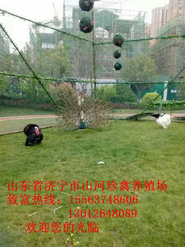 动物租赁海狮表演节目马戏团襄阳