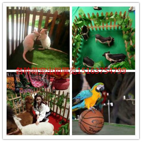 深圳萌宠乐园建设临时动物园建设