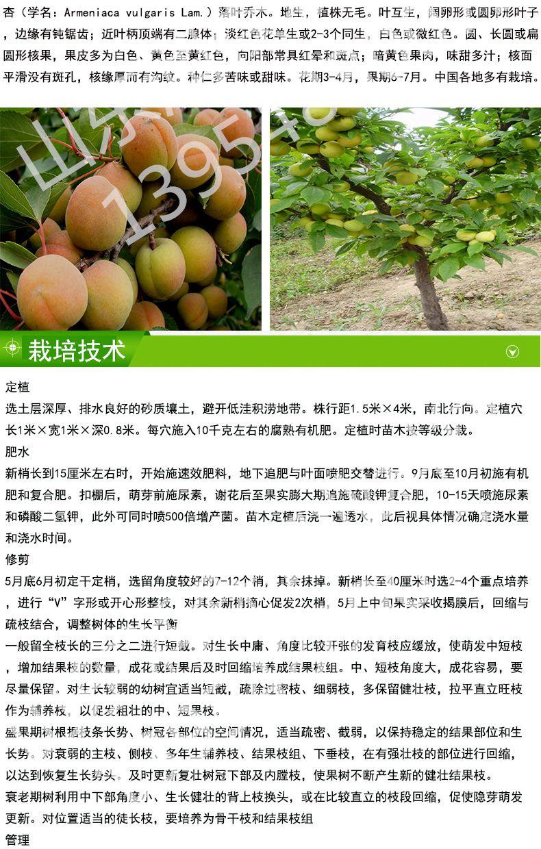 味王杏树幼苗病虫害防治